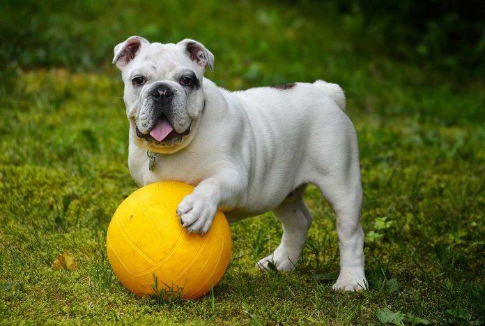 Čipování psů: zákon, registr, ISO normy a další otázky
